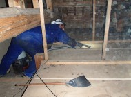 天井裏 アライグマの糞 回収中