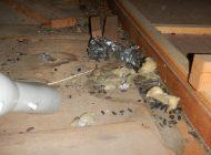 断熱材回収後 ネズミの糞を吸引清掃