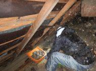 天井裏の糞 清掃中