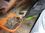 天井裏の糞 清掃中2